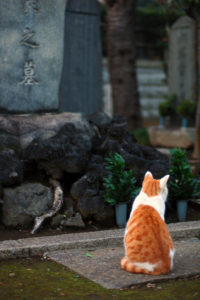Japanese Cemetery is a cats' garden di eesti, su Flickr