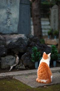 Japanese Cemetery is a cats' garden di eesti, su Flickr