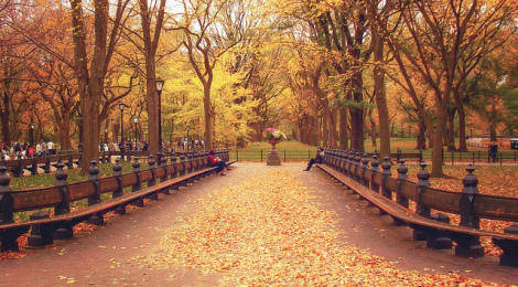 """Central Park, New York City, Fall"", di Vivienne Gucwa, su Flickr"