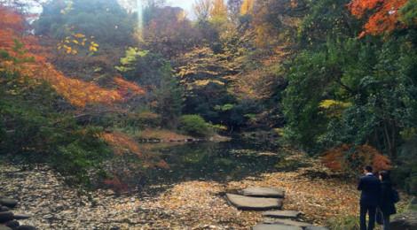 soseki-sanshiro_ike-turismoletterario