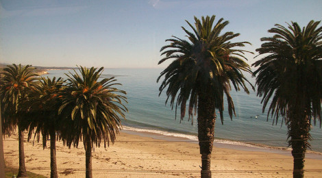 """Palm Tree Paradise"" di Jessica Jurassic, su Flickr"